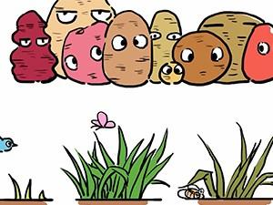 """食品有意思:当心土豆发""""毒""""芽"""