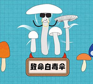 致命白毒伞是什么?