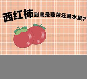 科普视频:西红柿到底是蔬菜还是水果?