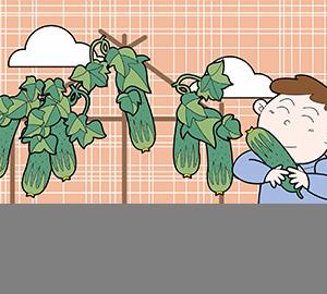 科普视频:黄瓜明明是绿色的,为什么叫黄瓜?